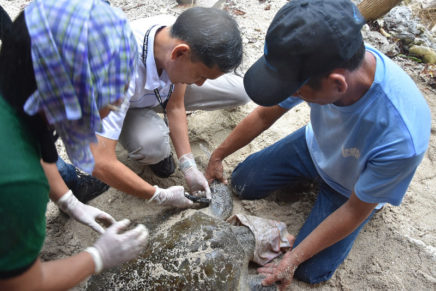Davao Light releases an Olive Ridley back into the sea